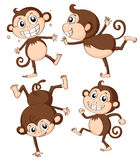 Four monkeys Stock Photo
