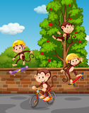 Four monkeys playing on the street Royalty Free Stock Photo