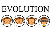 Four monkeys. Vector illustration. Funny evolution card Stock Photography