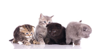 Four multicolored kittens Royalty Free Stock Photos