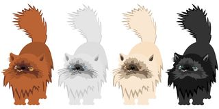 Four nice persian cats on white background Royalty Free Stock Photography