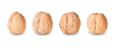 Four Nuts Lying In A Row Stock Images
