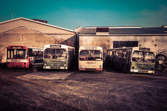 Four old busses on a german junk yard in sunlight Royalty Free Stock Photo