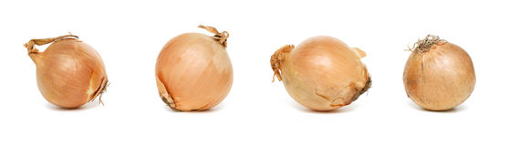 Four onions Stock Photo