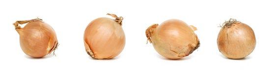 Four onions Stock Photo