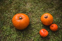 Four orange pumpkins harvest lying on green grass flat lay high angle view. Autumn royalty free stock photo