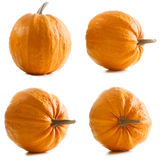Four orange pumpkins isolated on white background Royalty Free Stock Photo