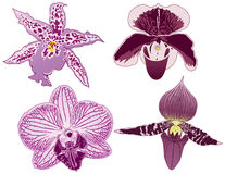 Four Orchids. To add to your designs Royalty Free Stock Image