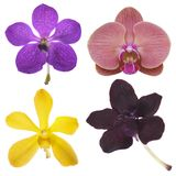 Four orchids isolated on white Stock Photo