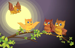Four owls. Illustration of four owls on the tree branch in night Stock Images