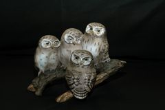 Four owls perched on a branch. Four owls in different stages of sleep...one eye opened, both shut looking in different diections Royalty Free Stock Image