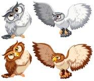 Four owls Royalty Free Stock Photo
