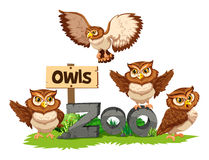 Four owls in the zoo. Illustration royalty free illustration