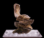 Four oyster shell on ice as balance stack Stock Images