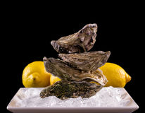 Four oyster shell on ice with lemon as balance stack Stock Photo