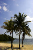 Four palm trees on a beach. Florida Bay, Everglades, USA stock images