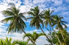 Four palm trees on blue sky stock photos