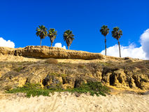 Four Palm Trees California Beach Royalty Free Stock Image