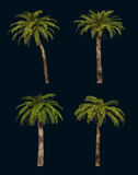 Four Palm Trees 3d CG Royalty Free Stock Image