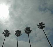 Four palm trees under the clouds Royalty Free Stock Photography