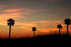 Four Palms. At sunset on Florida Gulf Coast. Madeira Beach Florida Royalty Free Stock Photography