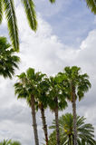 Four Palms Stock Photography