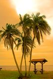 Four palms stock photos