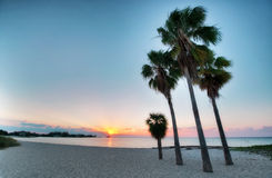 Four palms at the beach Royalty Free Stock Photos