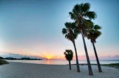 Four palms at the beach. Tall palms on a beach at Florida Keys Islands. USA royalty free stock photos