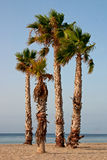 Four Palmtrees at the beach Stock Photos