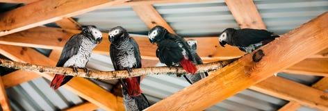 Four parrots Stock Images