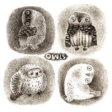 Four Pastel Owls Royalty Free Stock Photos