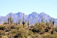 USA, Arizona: Four Peaks - And Some More Royalty Free Stock Image