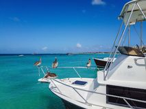 Four pelicans sitting on the railing on the front of a fishing boat on beautiful blue ocean stock photos