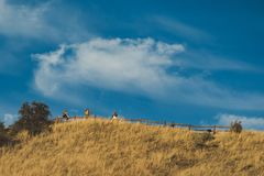 Four People Standing on Top of the Hill With Fence stock photos
