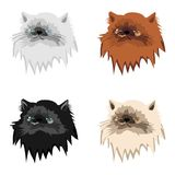 Four persian cats on white background Stock Photo