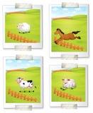 Four photos of animals Stock Image