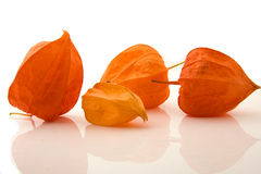 Four Physalis alkengi Stock Photo