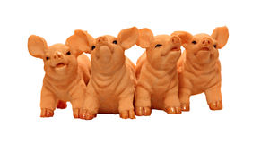 Four piglet pigs Royalty Free Stock Image