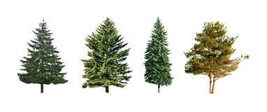 Four pine Stock Images