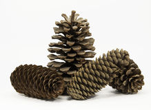 Four Pine Cones Royalty Free Stock Photo