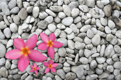 Four pink flowers Royalty Free Stock Photo