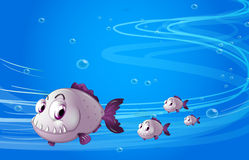 Four piranhas under the sea. Illustration of the four piranhas under the sea Royalty Free Stock Photo