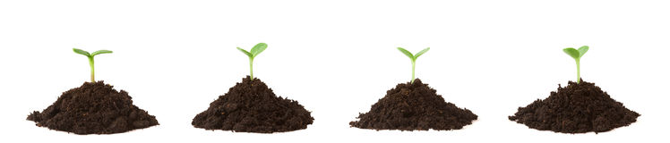 Four Plants on Dirt Piles Royalty Free Stock Photo