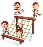Four playful monkeys Royalty Free Stock Photo