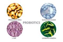 Four popular types of bacteria probiotics. L. casei, Saccharomyces boulardii, Bifidobacterium bifidus, Lactobacillus acidophilus royalty free illustration