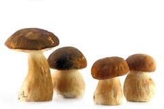 Four porcini mushroom. Isolaten on wnite Royalty Free Stock Photo