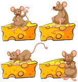 Four poses of mouse and cheese Stock Photos