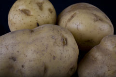 Four potatoes Stock Photo
