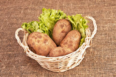 Four potatoes in basket. Four raw potatoes and lettuce in basket on rough linen fabric Royalty Free Stock Photography